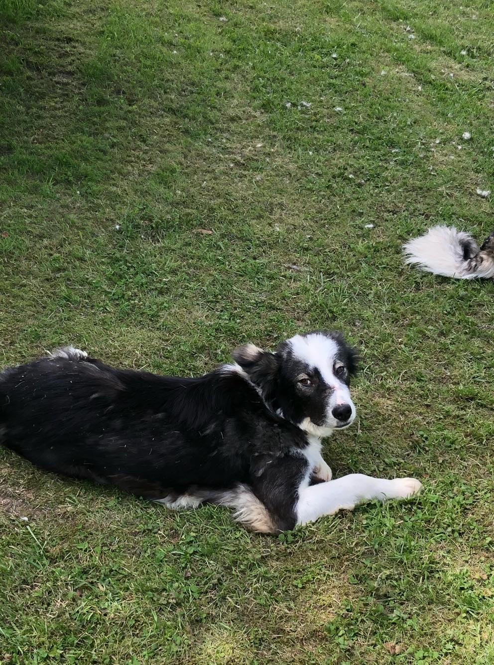Everest - chienne femelle - fourrière de Târgu Frumos - en famille d'accueil dans le 67 60582010