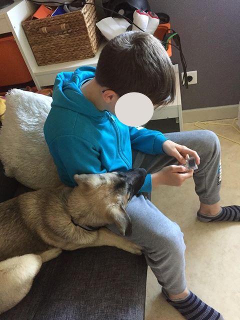 Grey-mâle- refuge d'Arad réservé adoption 67 60738110