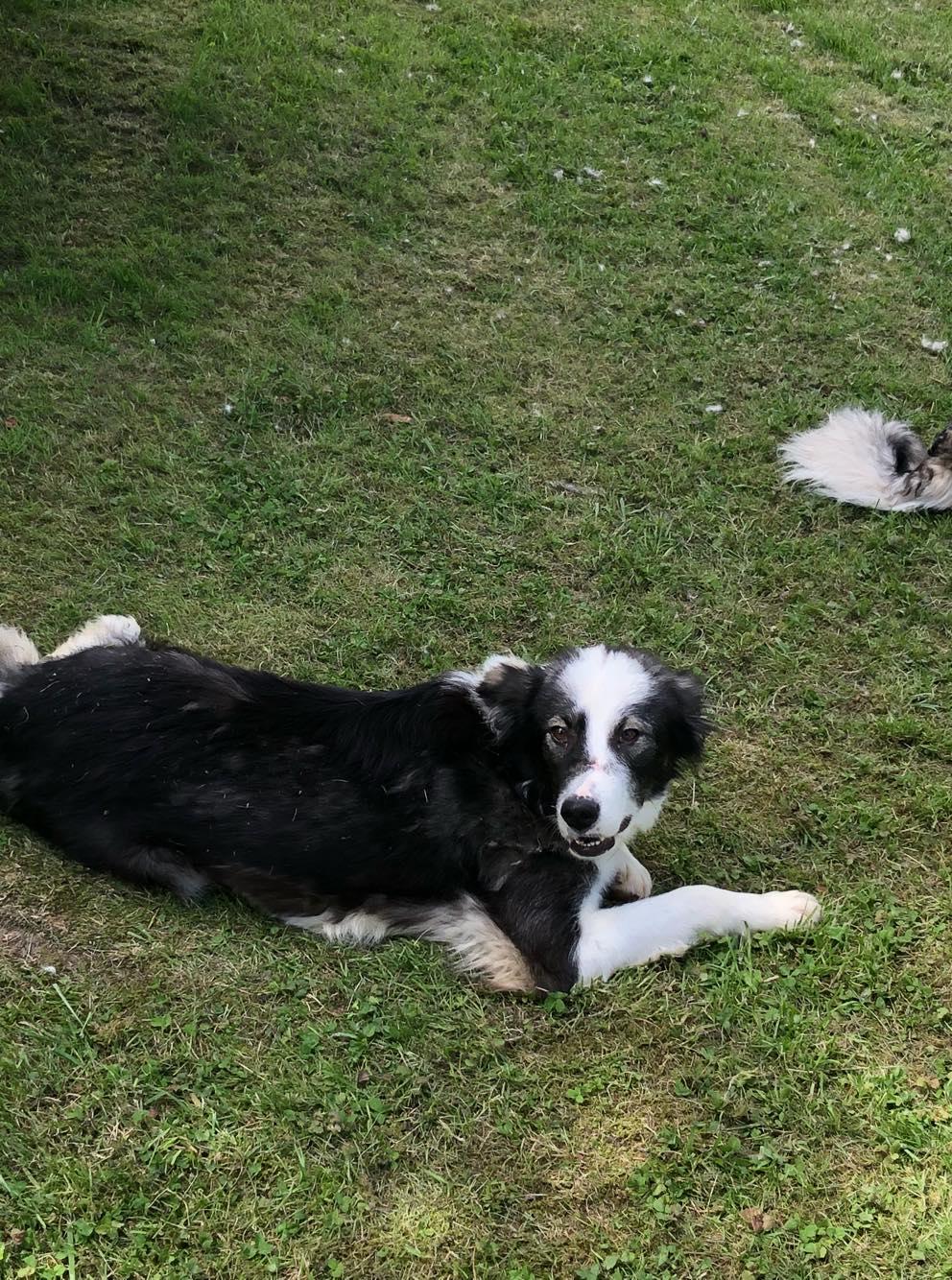 Everest - chienne femelle - fourrière de Târgu Frumos - en famille d'accueil dans le 67 60849810