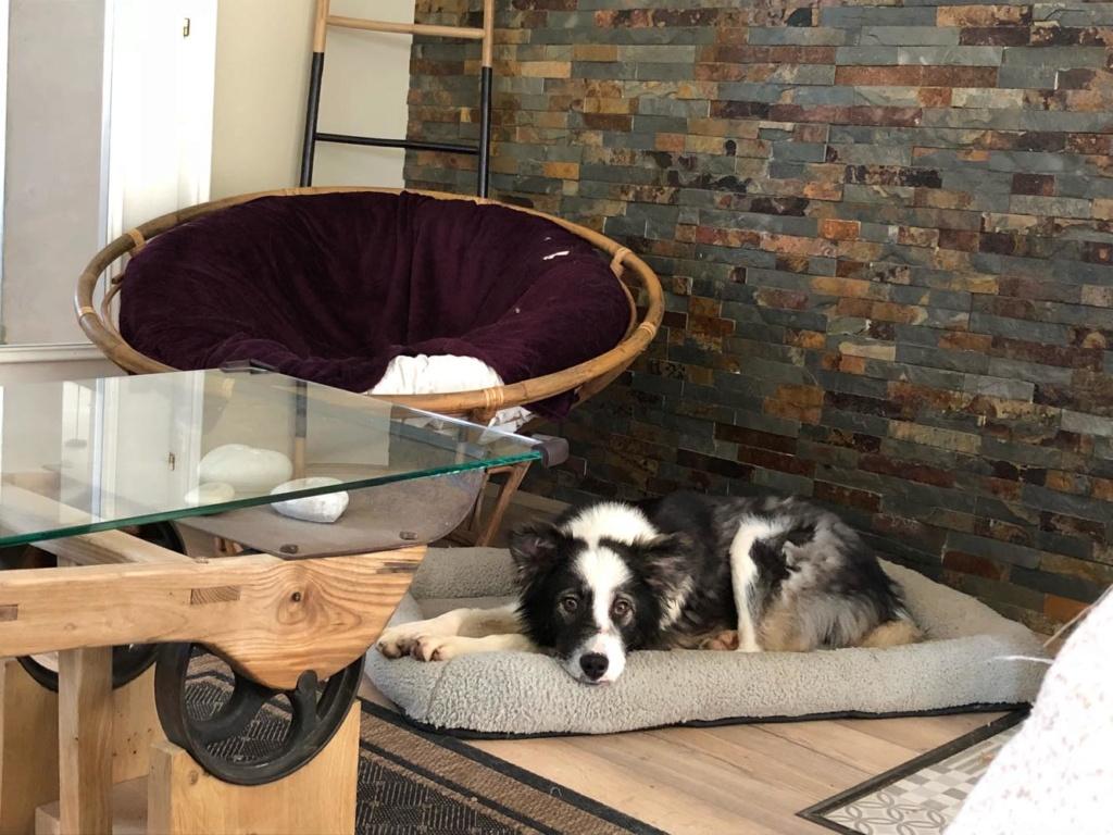 Everest - chienne femelle - fourrière de Târgu Frumos - en famille d'accueil dans le 67 60875910