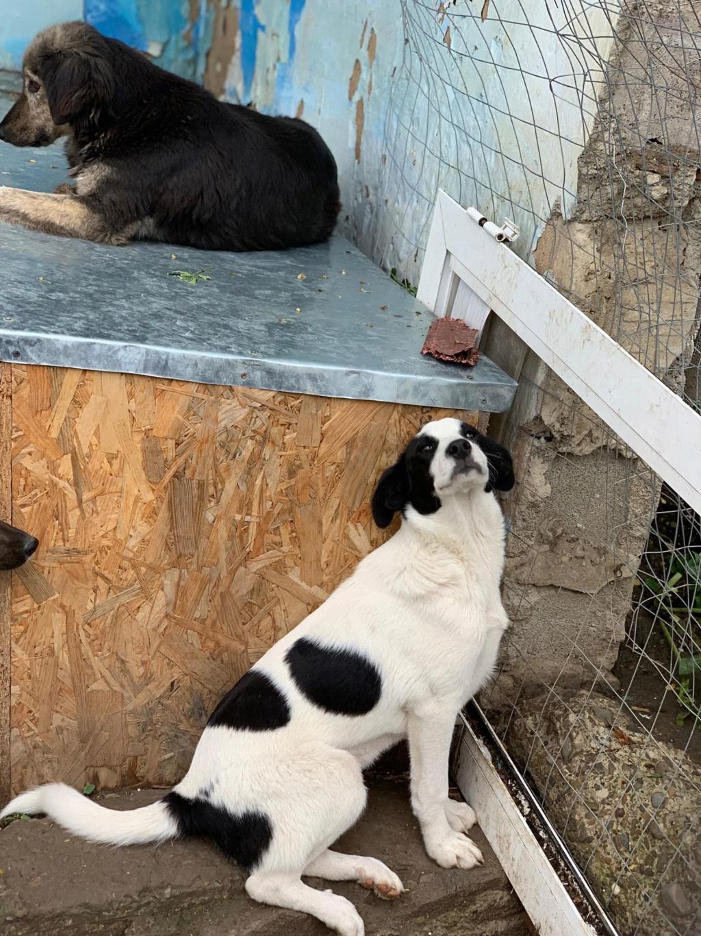 Opaline- femelle- refuge de Targu Frûmos - réservée adoption (57) 61584010