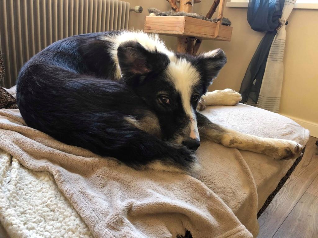Everest - chienne femelle - fourrière de Târgu Frumos - en famille d'accueil dans le 67 61712410