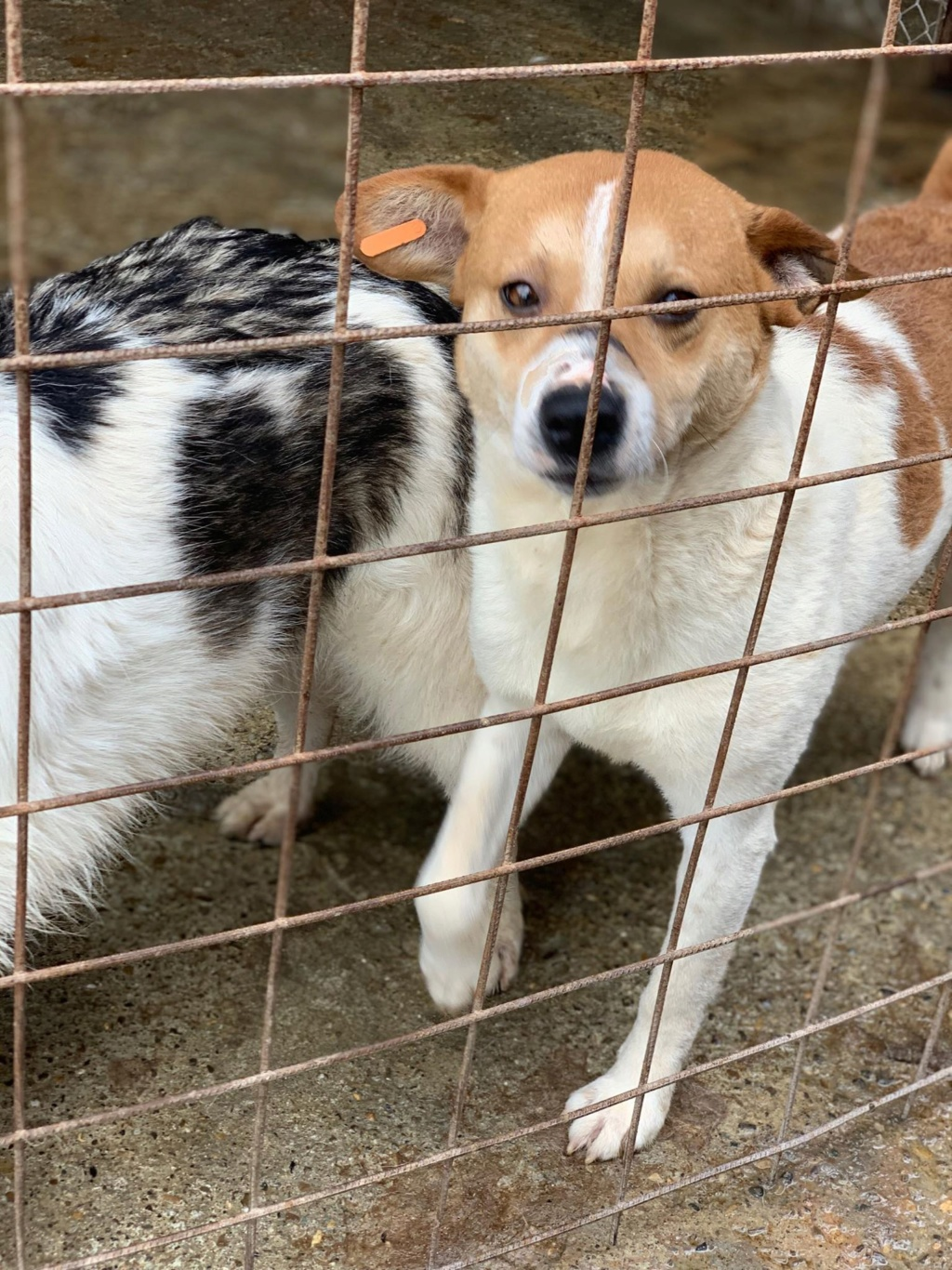 FlapJack - mâle - fourrière de Târgu Frumos - adopté via Andrea 61764010