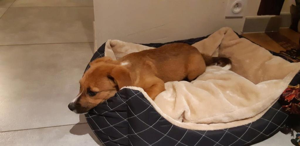 Stanley- mâle- refuge de Targu Frûmos - réservé adoption (67) 61767810