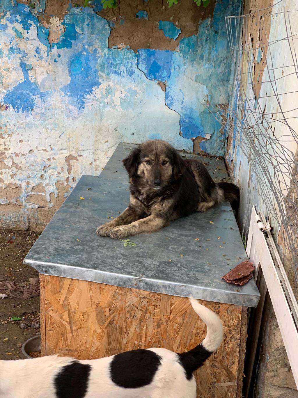 Maitika- femelle- refuge de Targu Frûmos - adoptée via Andreea 61799410