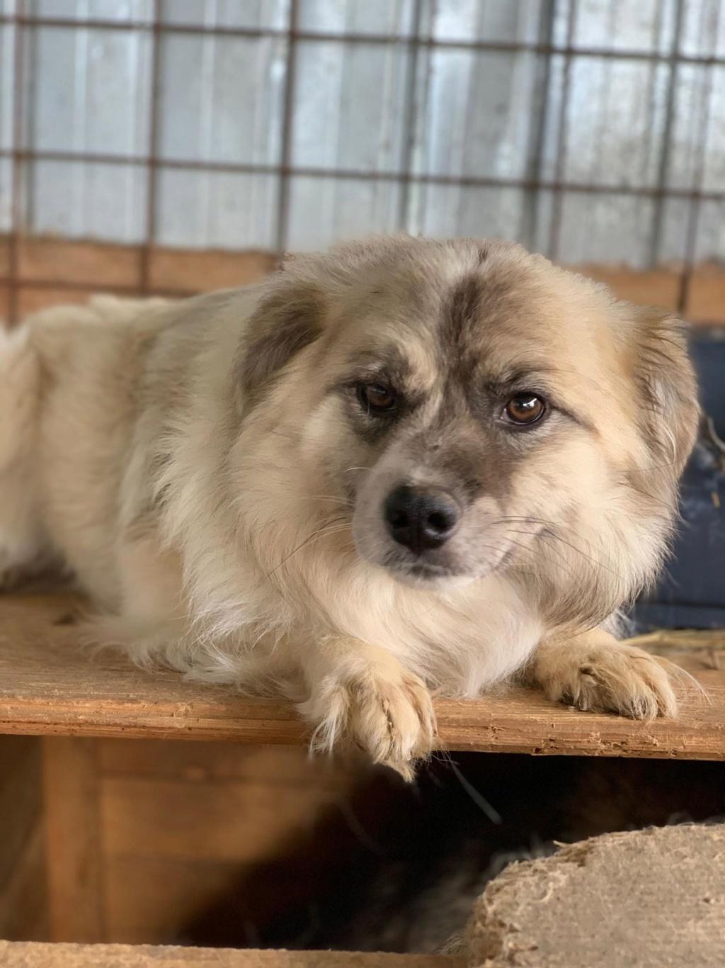 Vulpe - mâle - fourrière de Târgu Frumos - adopté via Andreea 61819610