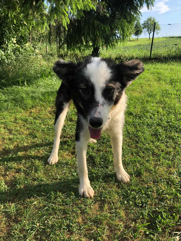Everest - chienne femelle - fourrière de Târgu Frumos - en famille d'accueil dans le 67 61872910