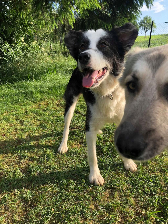 Everest - chienne femelle - fourrière de Târgu Frumos - en famille d'accueil dans le 67 61920810