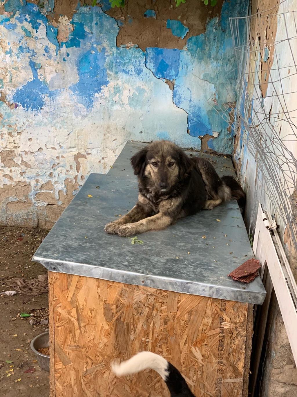 Maitika- femelle- refuge de Targu Frûmos - adoptée via Andreea 61928810