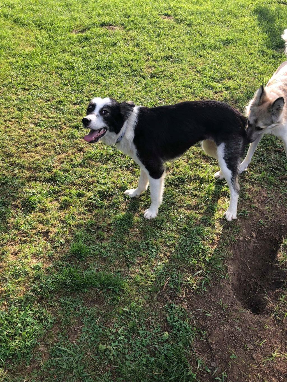 Everest - chienne femelle - fourrière de Târgu Frumos - en famille d'accueil dans le 67 61941810