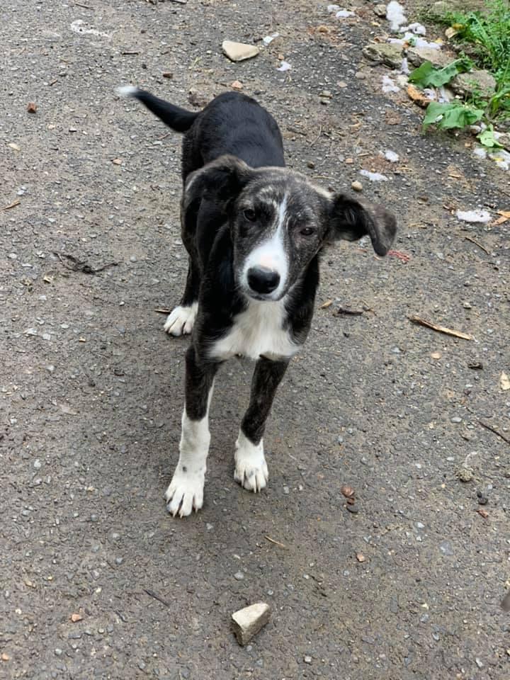 Humphrey - mâle - fourrière de Târgu Frumos - adopté via Andreea 61943010