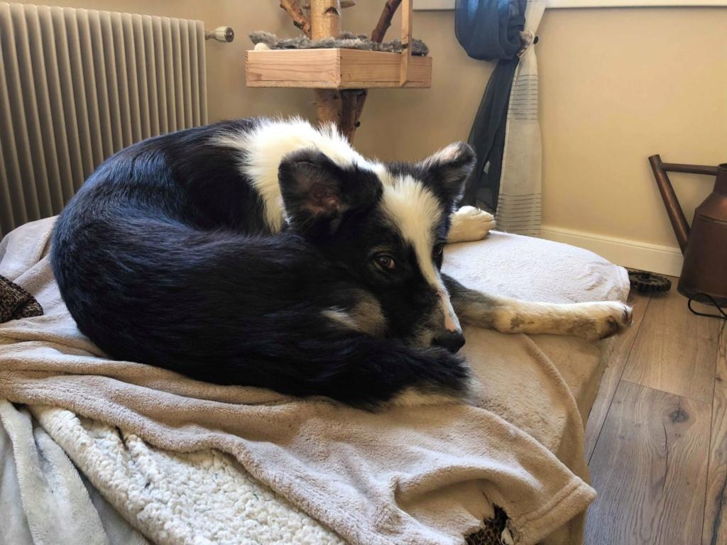 Everest - chienne femelle - fourrière de Târgu Frumos - en famille d'accueil dans le 67 61949110