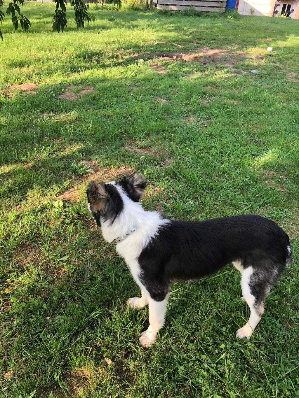 Everest - chienne femelle - fourrière de Târgu Frumos - en famille d'accueil dans le 67 61967610