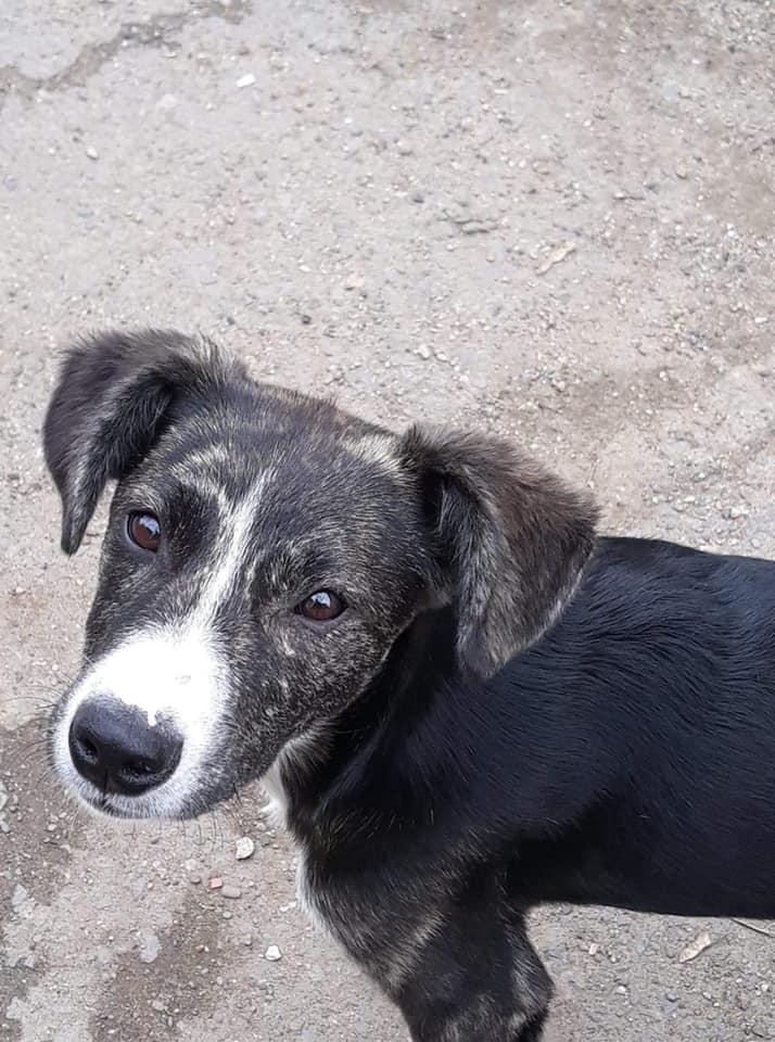 Humphrey - mâle - fourrière de Târgu Frumos - adopté via Andreea 61982010