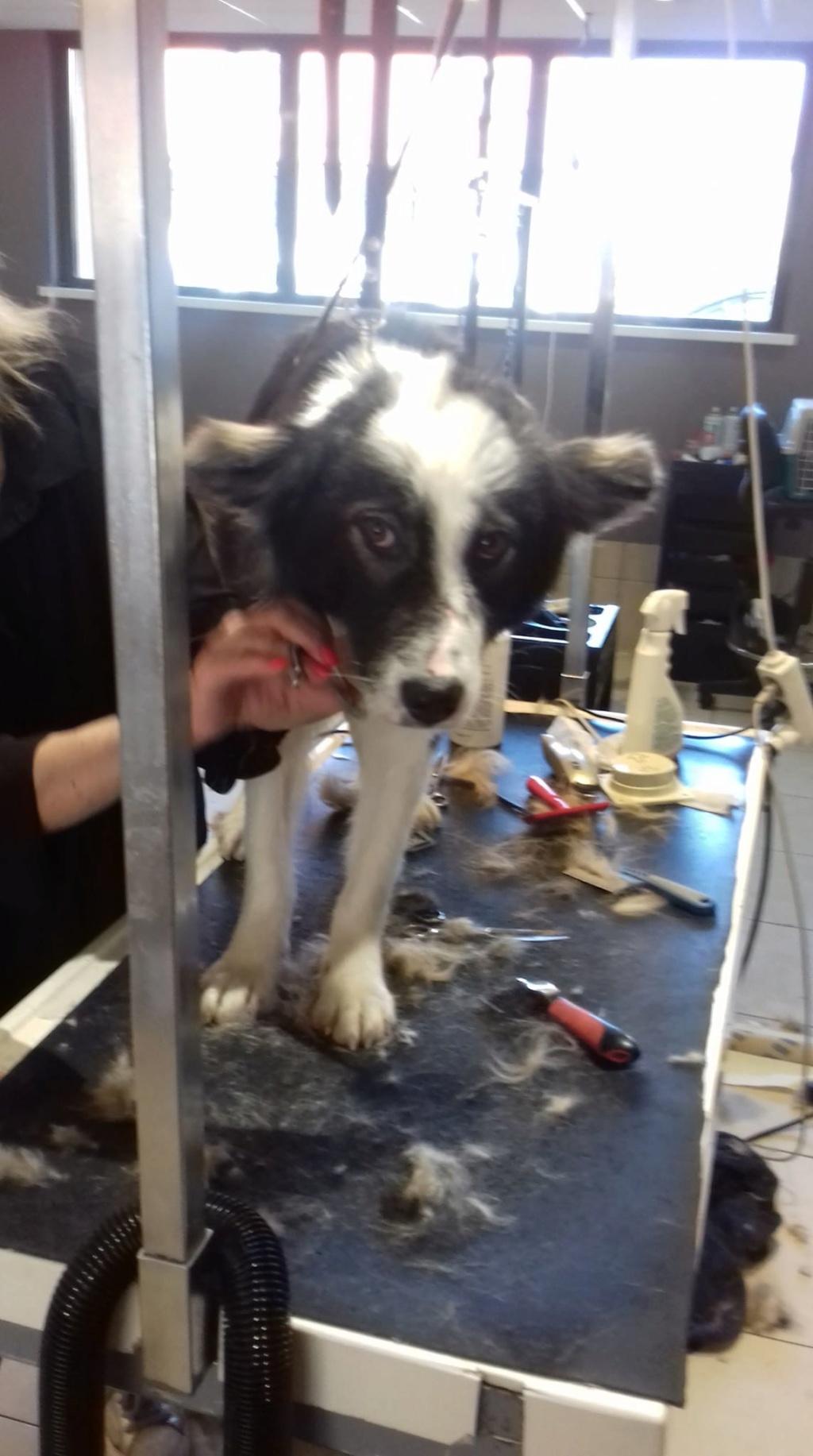 Everest - chienne femelle - fourrière de Târgu Frumos - en famille d'accueil dans le 67 61987610