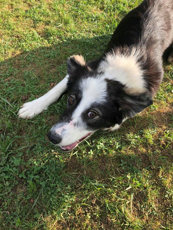 Everest - chienne femelle - fourrière de Târgu Frumos - en famille d'accueil dans le 67 61991010