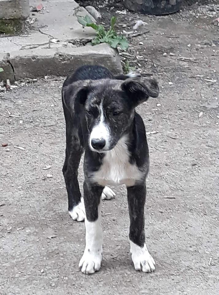 Humphrey - mâle - fourrière de Târgu Frumos - adopté via Andreea 61993510