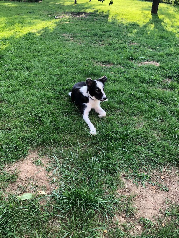 Everest - chienne femelle - fourrière de Târgu Frumos - en famille d'accueil dans le 67 62040610
