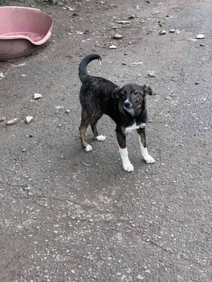 Humphrey - mâle - fourrière de Târgu Frumos - adopté via Andreea 62178910