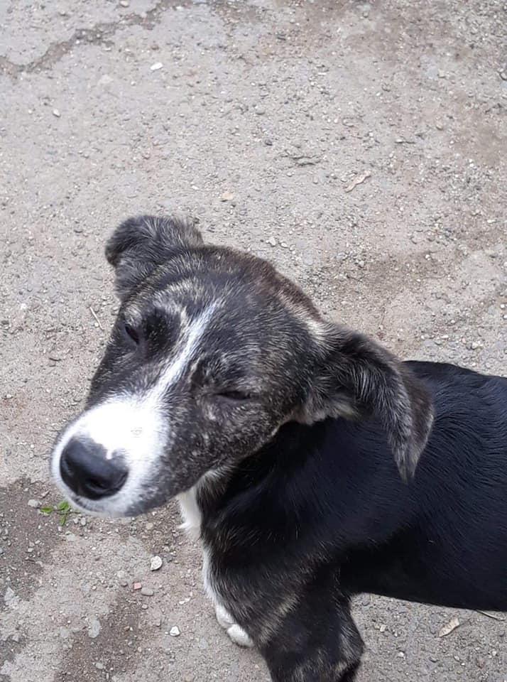 Humphrey - mâle - fourrière de Târgu Frumos - adopté via Andreea 62255910