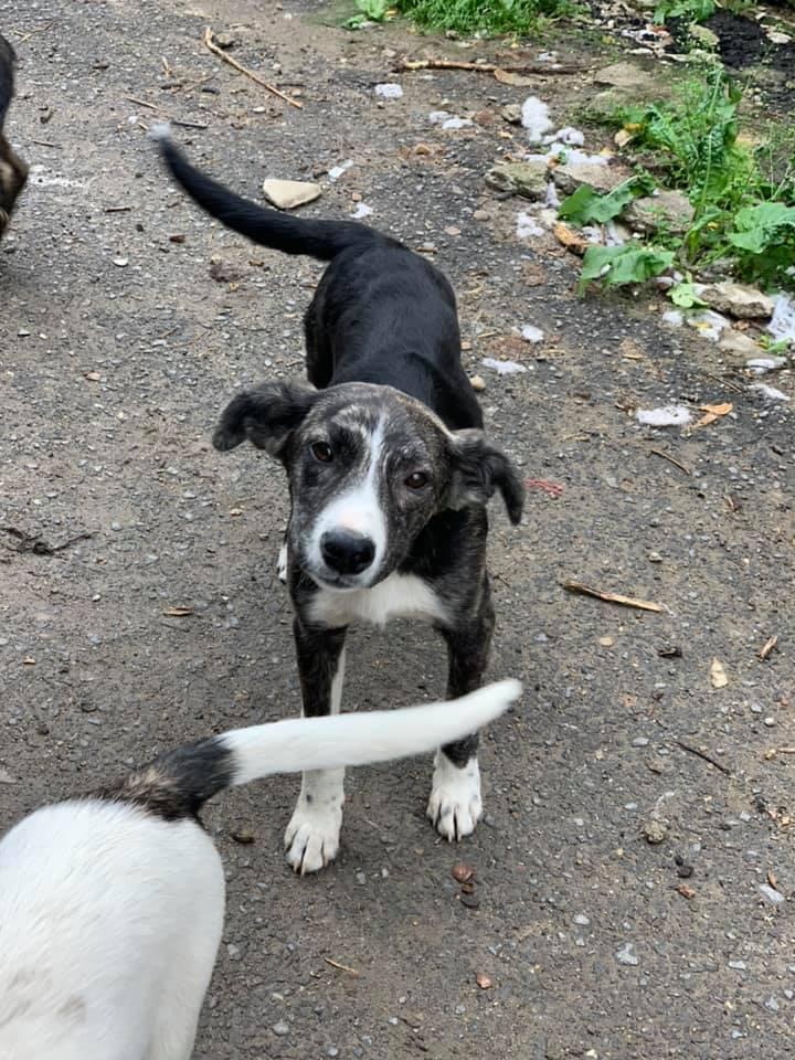 Humphrey - mâle - fourrière de Târgu Frumos - adopté via Andreea 62416710