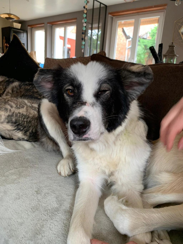 Everest - chienne femelle - fourrière de Târgu Frumos - en famille d'accueil dans le 67 64108210