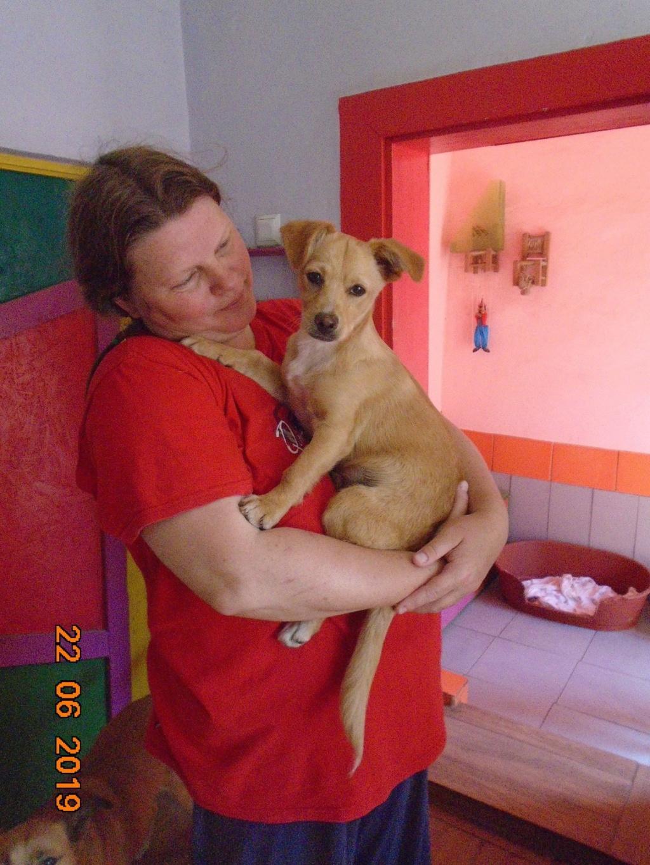 Titus- mâle- refuge d'Arad - réservé adoption 92 64840310