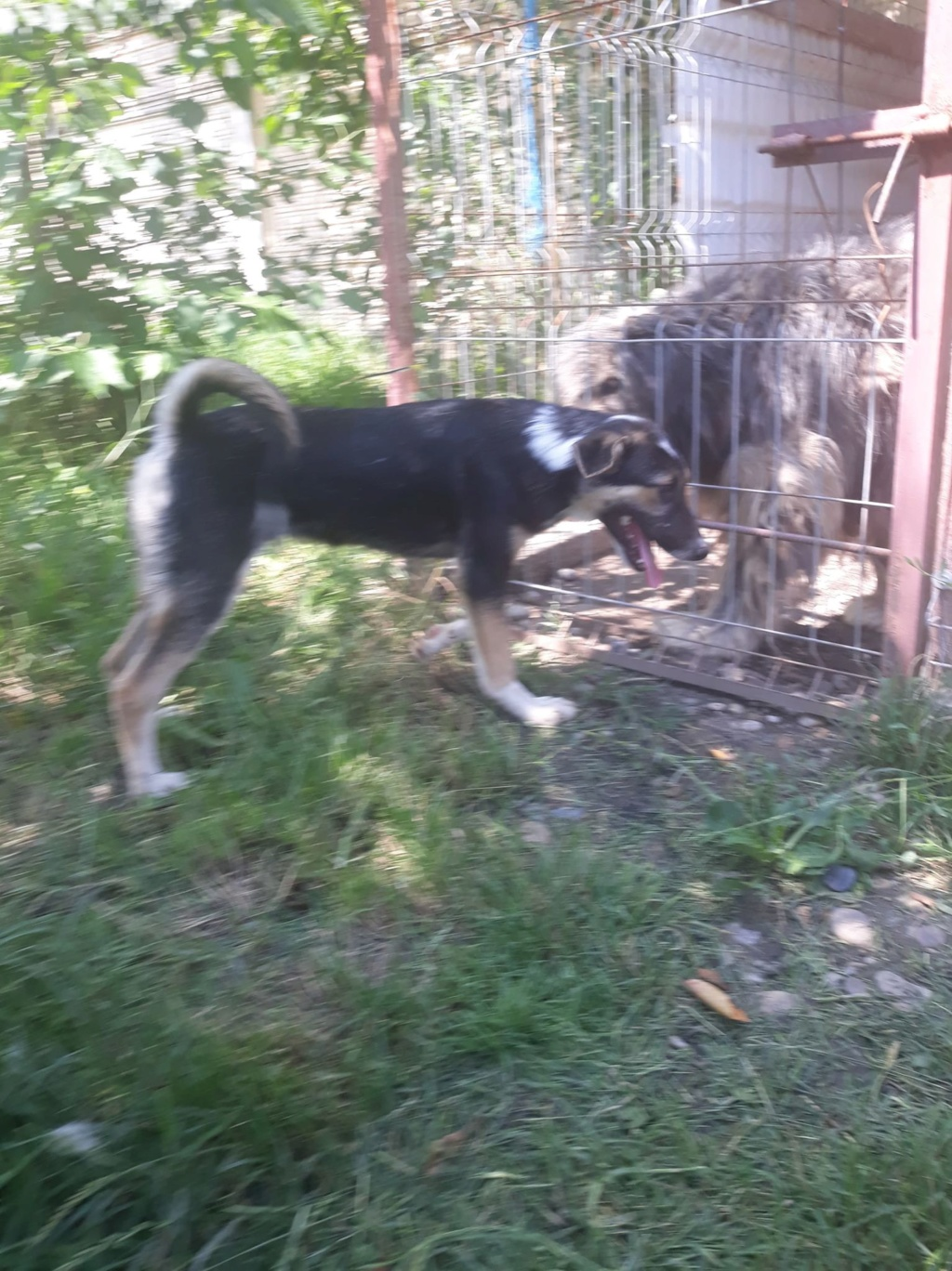 Tessa- femelle- refuge d'Arad 64909310