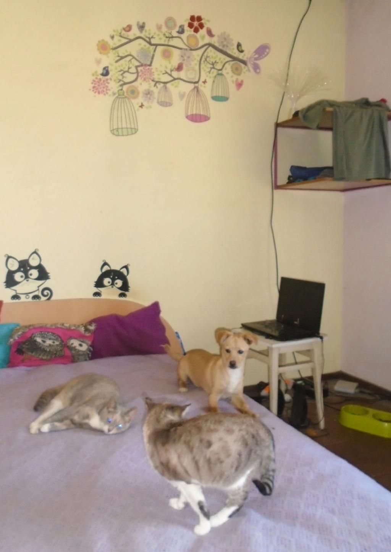 Titus- mâle- refuge d'Arad - réservé adoption 92 65030910