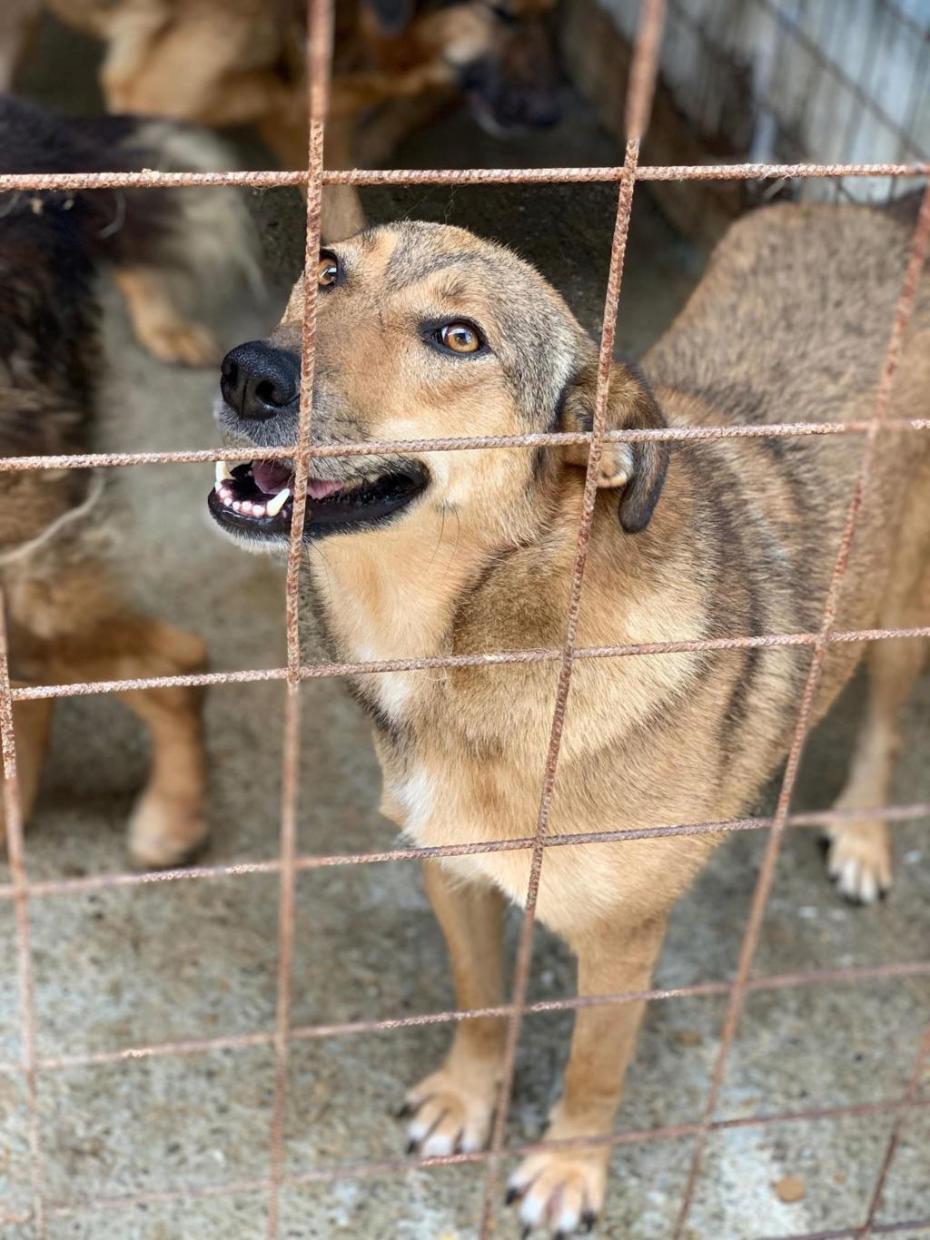Kenya - femelle - refuge de Târgu Frumos - adoptée via Andreea 67064711