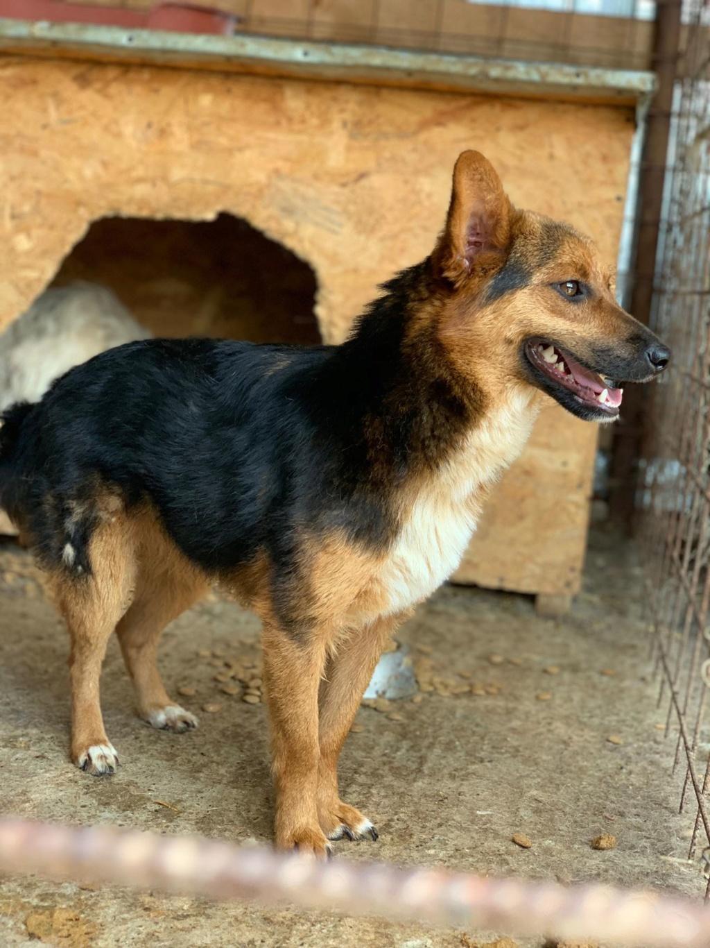 Tartine (ex-Panzani) - femelle - fourrière de Târgu Frumos - Réservée adoption (69) 67142210