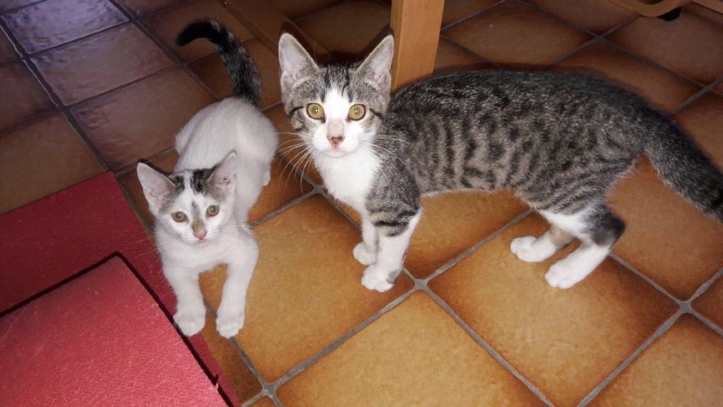 Phyllali (ex-Tick) - Chaton femelle - réservée adoption 67 67343010