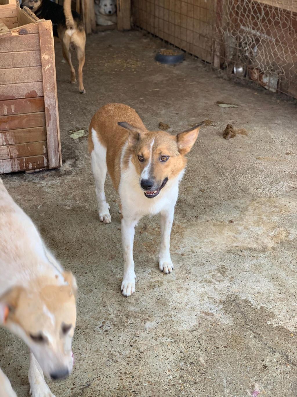 Sabrina - femelle - fourrière de Târgu Frumos 67365010