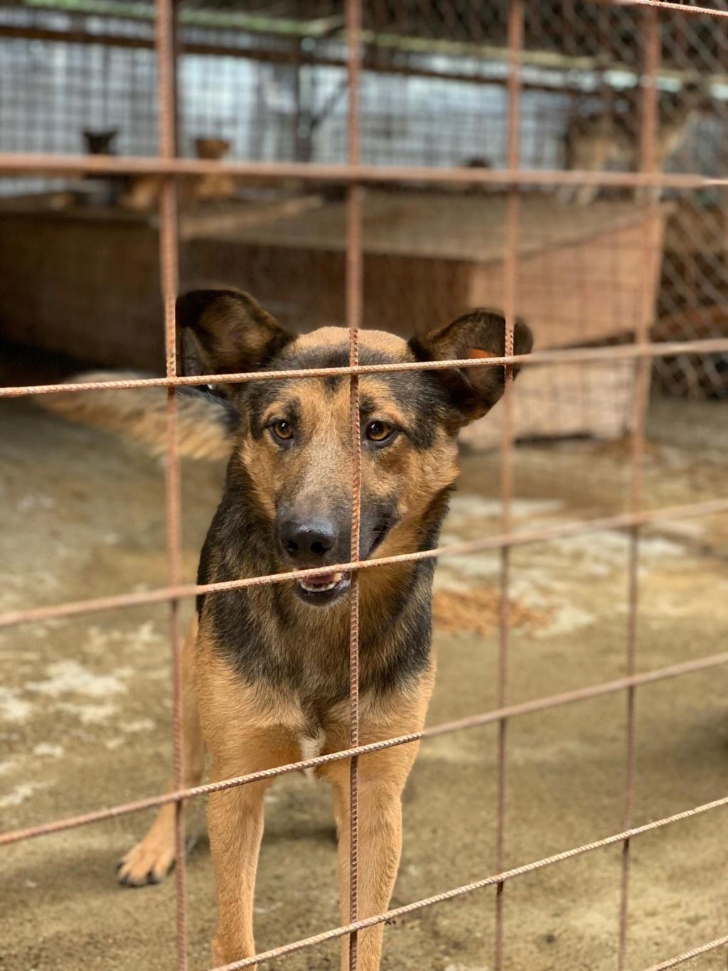 Minos - mâle à Targu Frumos - en famille d'accueil dans le 67 - réserve adoption (01) 67630110