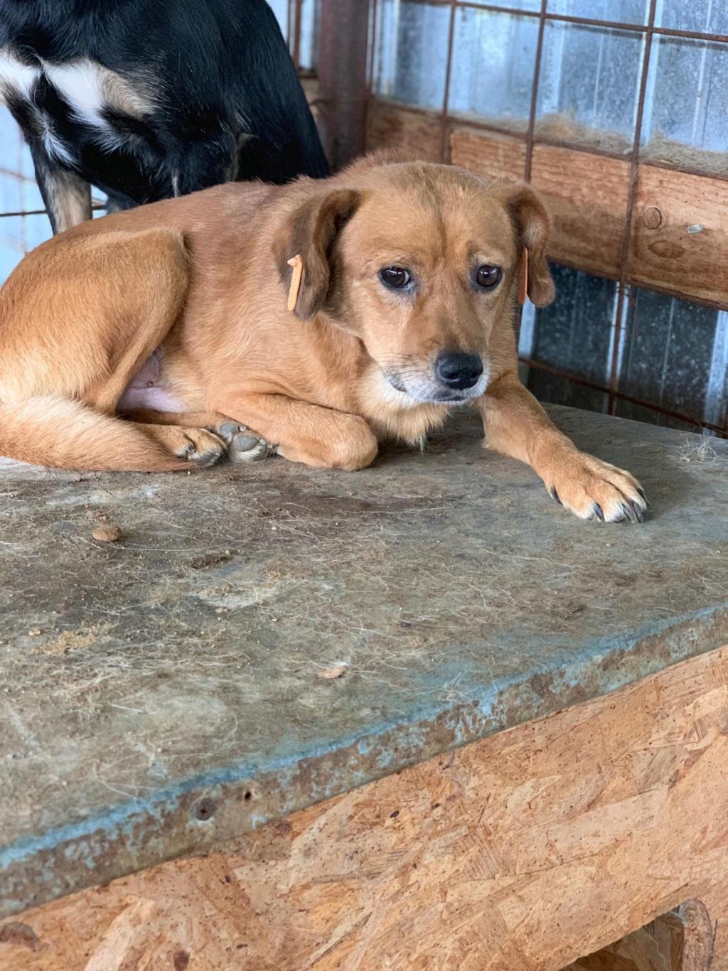 Cosmo - mâle - fourrière de Târgu Frumos - Réservé adoption (68) 67636910