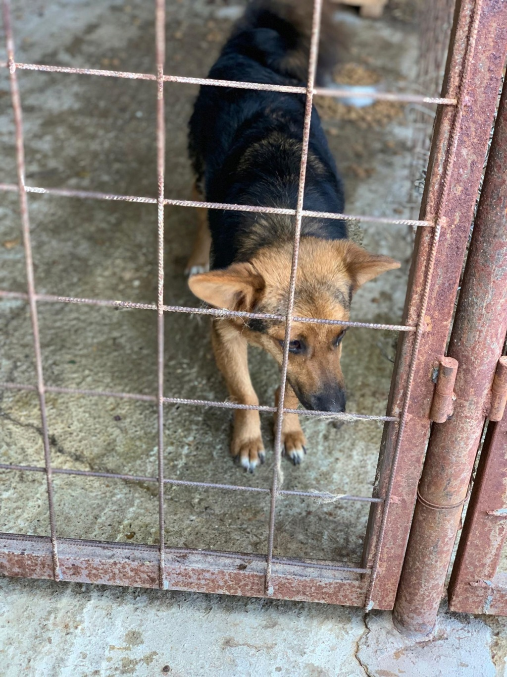 Tartine (ex-Panzani) - femelle - fourrière de Târgu Frumos - Réservée adoption (69) 67647710
