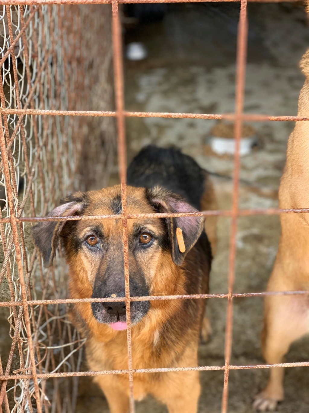 Lunky - mâle -  fourrière de Târgu Frumos - frais d'adoption réduits 67671810