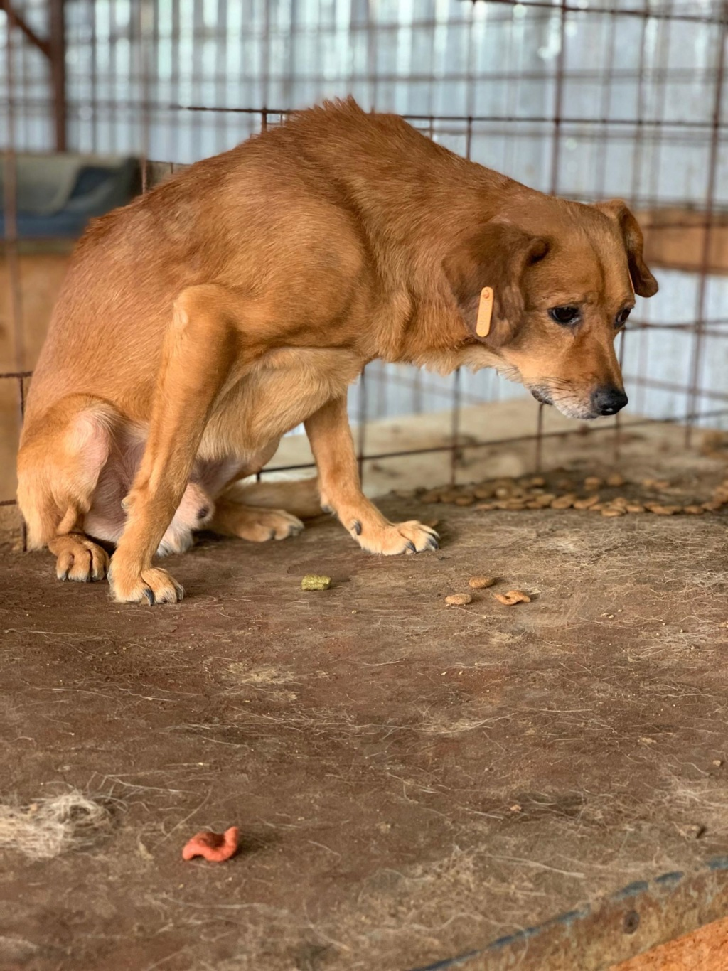 Cosmo - mâle - fourrière de Târgu Frumos - Réservé adoption (68) 67730210