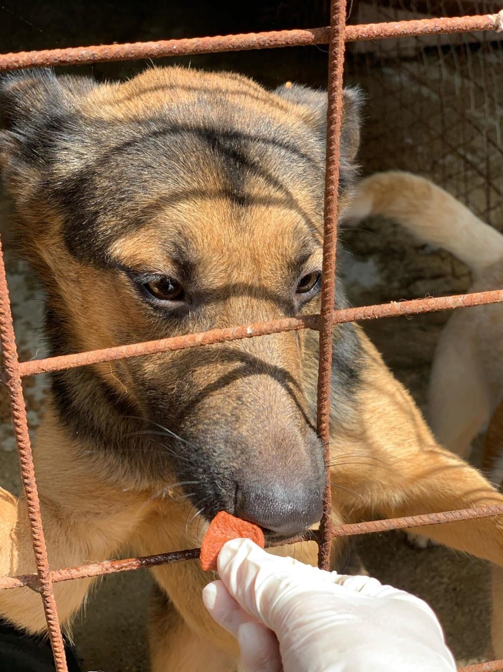 Minos - mâle à Targu Frumos - en famille d'accueil dans le 67 - réserve adoption (01) 67822310