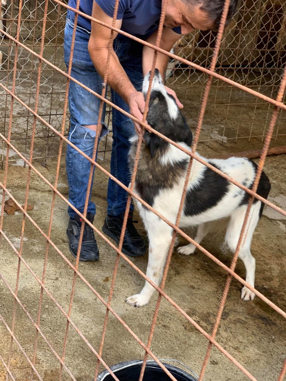 Kona - femelle - fourrière de Târgu Frumos - Réservée adoption (22) 67929210