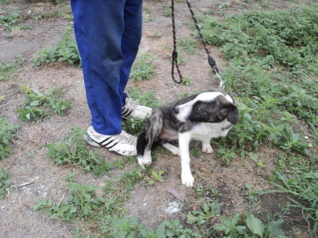 Lola - femelle - refuge d'Arad - réservée adoption (67) - réservée adoption (67) 67944010