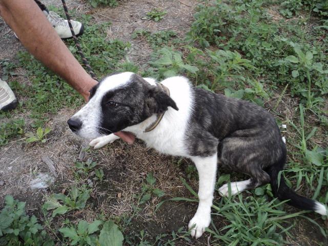 Lola - femelle - refuge d'Arad - réservée adoption (67) - réservée adoption (67) 67954310