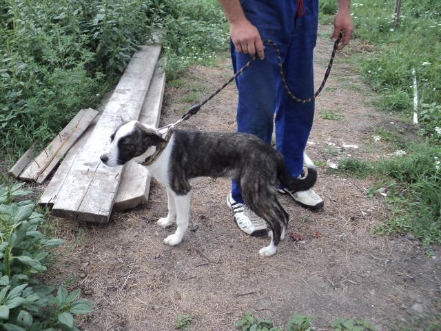 Lola - femelle - refuge d'Arad - réservée adoption (67) - réservée adoption (67) 68242210