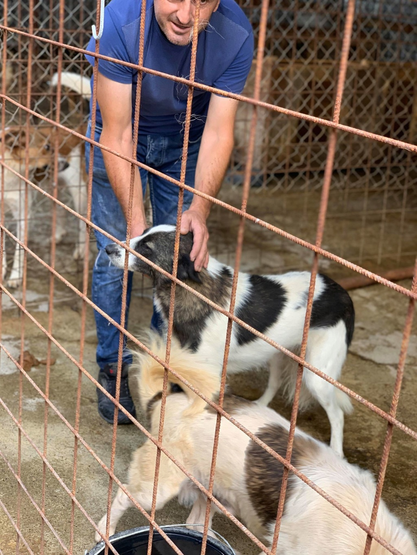 Kona - femelle - fourrière de Târgu Frumos - Réservée adoption (22) 68260310