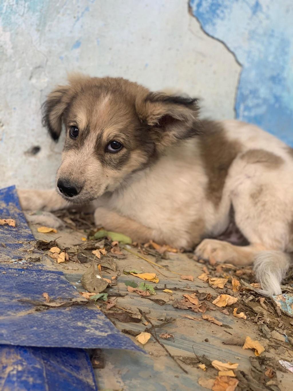 Hélios-mâle- fourrière de Târgu Frumos - adopté via Andreea 68273010