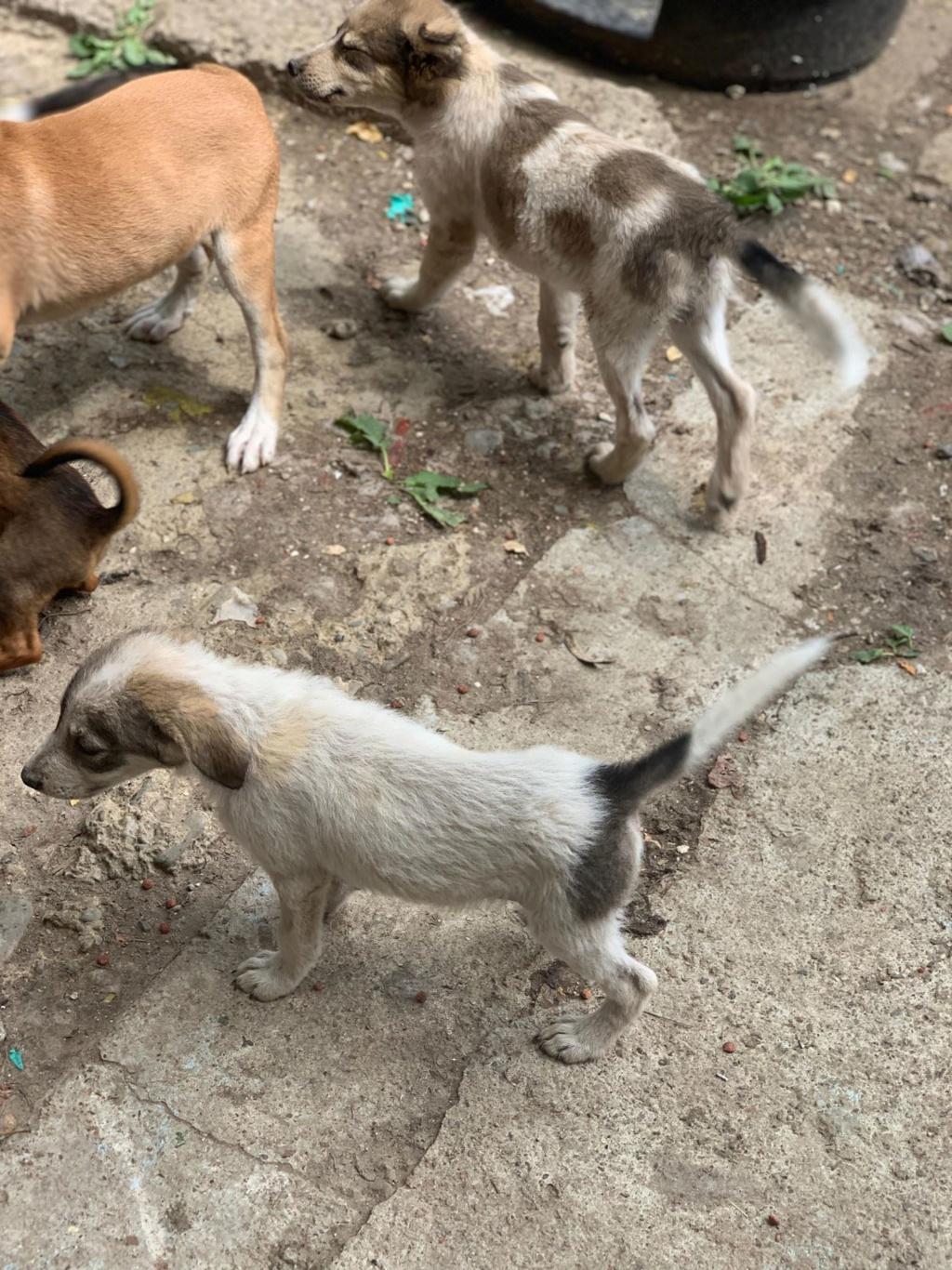 Hélios-mâle- fourrière de Târgu Frumos - adopté via Andreea 68436511