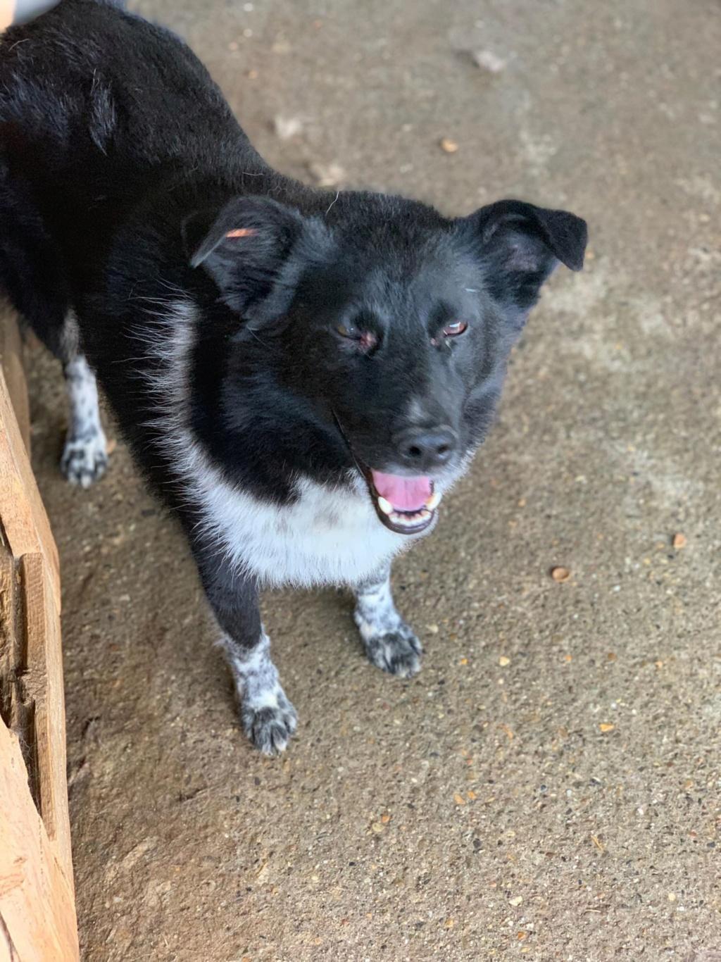 Dakota - femelle - fourrière de Târgu Frumos - Réservée adoption (88) 68470110