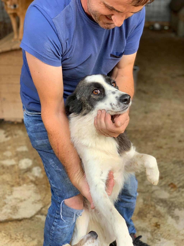 Kona - femelle - fourrière de Târgu Frumos - Réservée adoption (22) 68471410