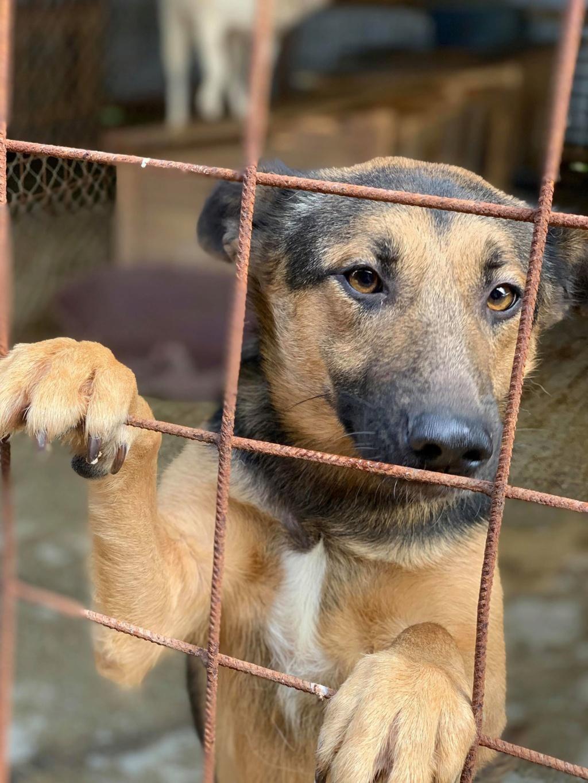 Minos - mâle à Targu Frumos - en famille d'accueil dans le 67 - réserve adoption (01) 68495310