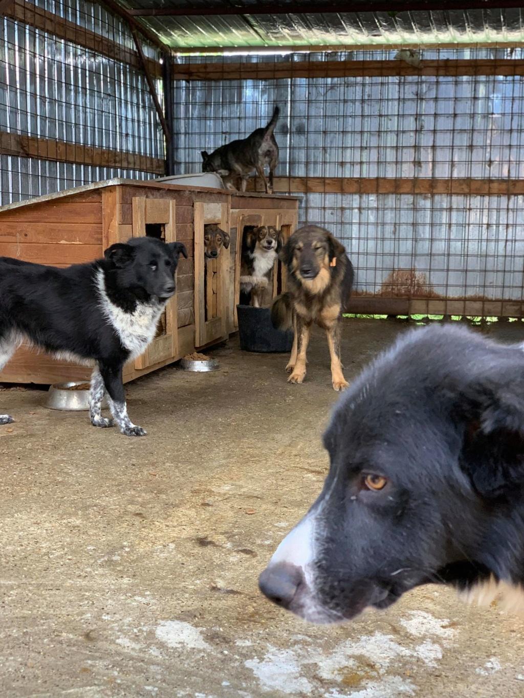 Dakota - femelle - fourrière de Târgu Frumos - Réservée adoption (88) 68526210